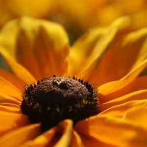 beplantingsplan bloementuin