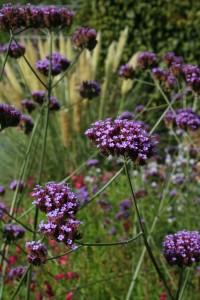 overbeek gardendesign planten voor weinig onderhoud